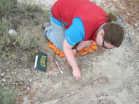 Excavating a bone in Dinosaur Provincial Park