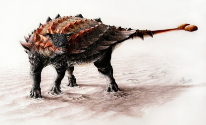 Ziapelta reconstruction by Sydney Mohr
